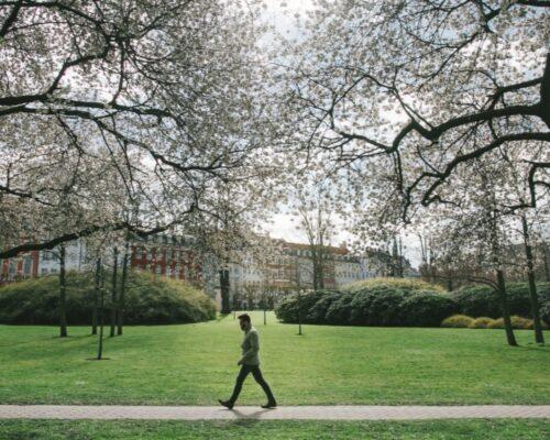 København parker: De 5 bedste parker i nærheden af København centrum